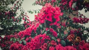 Jardins et terroirs en fêtes - Berneval le Grand @ Berneval-le-Grand | Berneval-le-Grand | France